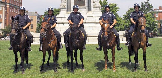 Police Horses